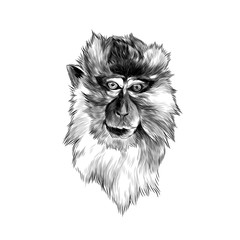 Door stickers Hand drawn Sketch of animals head of macaque in full face on white background, sketch vector graphics monochrome illustration