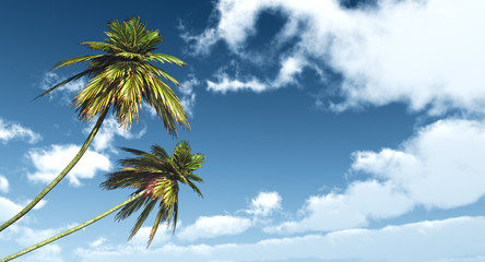 two palms against the blue sky