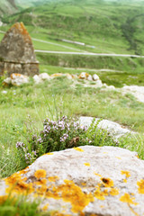 purple flowers with grass grow near the stone in the foreground, photo on the background of stone houses green hills and mountains, Kabardino-Balkaria