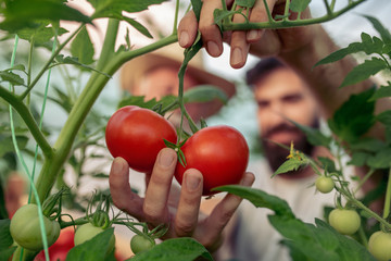 Family in tomato plant at hothouse
