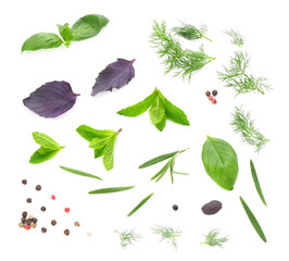 Composition with fresh herbs on white background