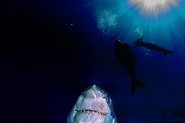 Great White shark and mermaid underwater