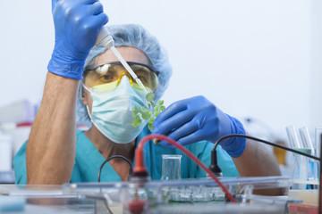 scientist holding diseased plant