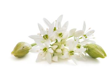 Ramsons flowers