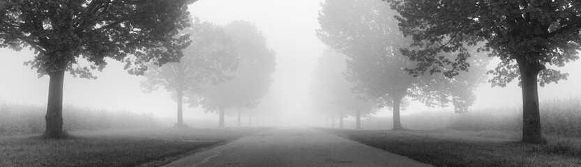 Avenue of Linden Trees shrouded in Fog, black and white