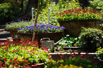 Garden with multicolor flowers