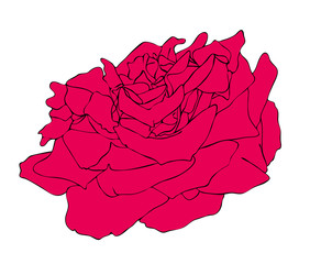 Vector illustration, isolated red rose flower, outline hand painted drawing