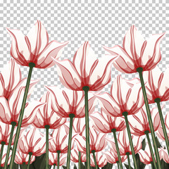 Abstract flowers, bottom view on a transparent backdrop, vector illustration, colorful drawing. Drawn white red buds, petals and stalks growing upwards. Floral background, card, design element, print