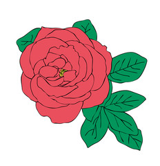 Vector illustration, isolated red rose flower with leavs, outline hand painted drawing