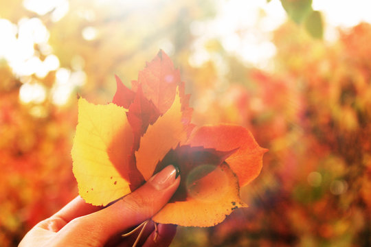 Autumn beautiful bright background. Colorful leaves in the hand with black manicure copy space