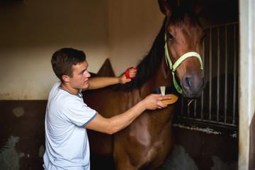 Brushing an horse