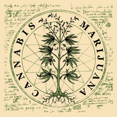 Vector banner for legalize marijuana with hemp plant on abstract old papyrus background or grunge style manuscript. Natural product made from organic hemp. Smoking weed. Medical cannabis logo