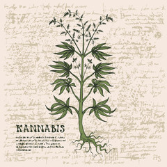 Vector banner with hand-drawn cannabis plant on abstract old papyrus background or grunge style manuscript. Hemp, Cannabis or marijuana, medicinal plant. Smoking weed