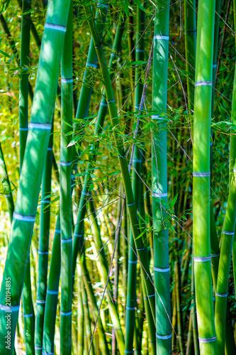 Im Bambuswald Stock Photo And Royalty Free Images On Fotolia Com