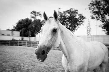 Portrait of a horses indoor in a riding hall