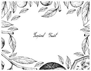 Hand Drawn Frame of Feroniella Lucida and Cordia Caffra Fruits