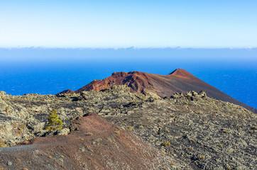 Meerblick im Süden von La Palma mit einem einzelnen grünen Baum im Vordergrund