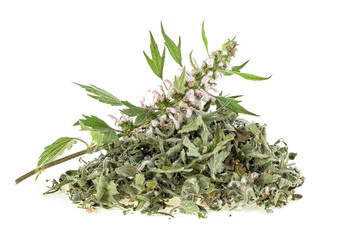 Motherwort plant over white background. Heap of dried and fresh plant.