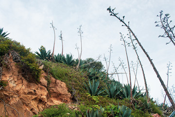 Hillside green plants on Alcatraz