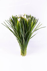 White irises in a bouquet