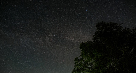 Night starry sky above the treetops. A view of the open space from Earth.