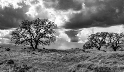Trees with cloud background