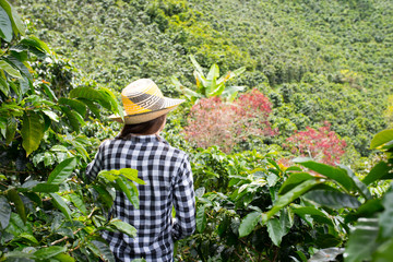 Woman with hat on coffee farm