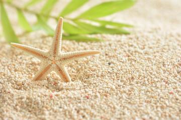 ヒトデ サンゴ砂 ヤシの葉