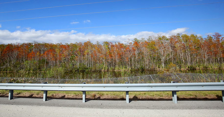 Changing of the seasons in Florida can be seen as the Florida maple tree leaves turn red along Alligator Alley,  also known as Interstate I-75.