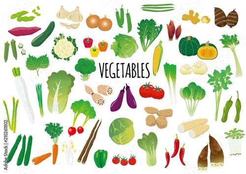 野菜のイラストセットfotoliacom の ストック画像とロイヤリティフリー