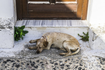 Dog on the threshold of the Greek house