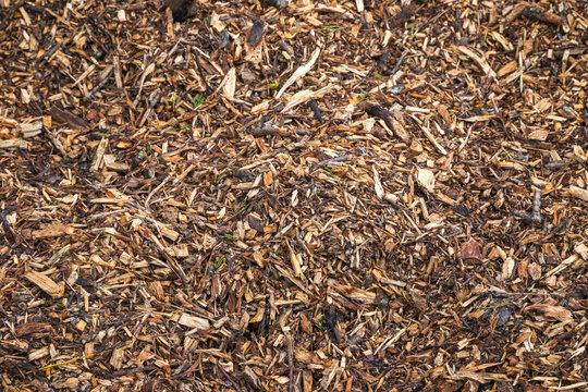 Image filled with wood chips and twigs