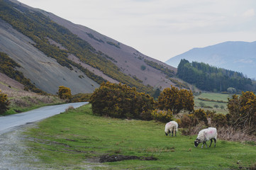 Countryside landscape at a sheep farm in Lake District of England, United Kingdom