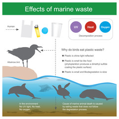 Effect of marine waste. Cause of marine animal death is caused by eating waste that dose not follow the degradation process and cause of Albatross bird death