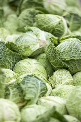 Savoy cabbages, fresh and raw