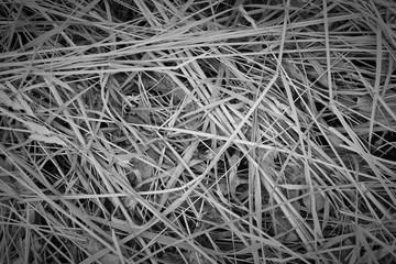 grass hay texture background grey