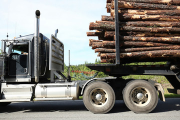 Close up of a semi truck in rural Georgia, carrying a full load of pine tree logs, on it's way to the paper mill.