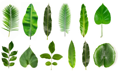 Collection of different tropical leaves isolated on white background.