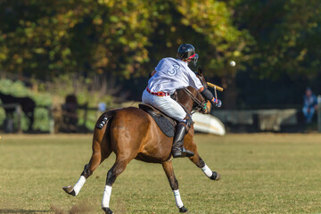 Polo Rider Pony Game Action