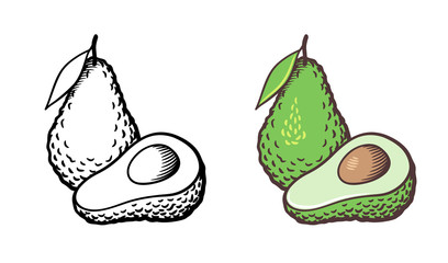 Hand drawn vector illustration of avocado. Whole fruit with leaf, cross section and kernel. Outline and colored version