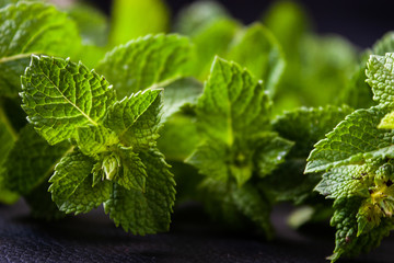 Green mint leaves on a black background. Fresh green leaves.