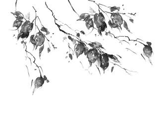 Watercolor drawing, a branch of a birch, an apple-tree, a cherry, a poplar with leaves.black and white silhouette leaves in the wind. An abstract splash of paint. On white isolated background.