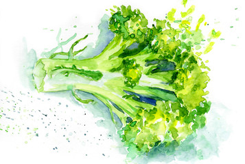 watercolor painting of vegetables. broccoli whole