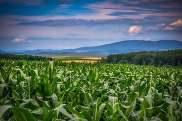 Foto op Plexiglas Groene Agriculture