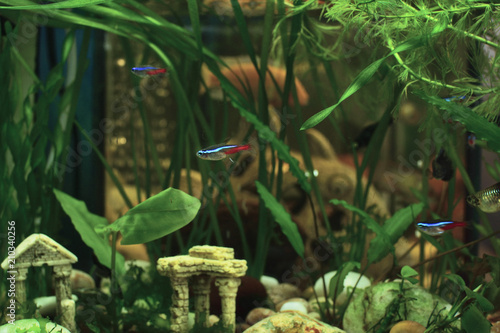 Aquarium life  Aquarium decorated with green aquarium plants