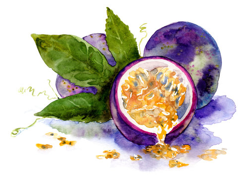 watercolor drawing of fruit. ripe passion fruit
