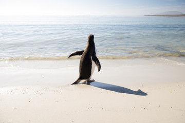 Penguin on beach