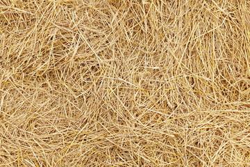 Fototapeta straw, dry straw, hay straw yellow background, hay straw texture obraz