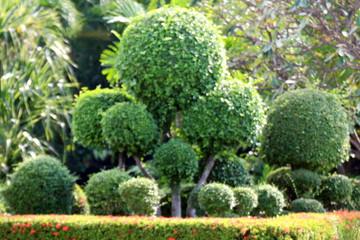 blurred garden tree, blurred background image of bending bushes sphere tree green leaf spherical shrub garden