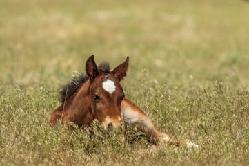 Cute Wild Horse Foal in Utah in Summer